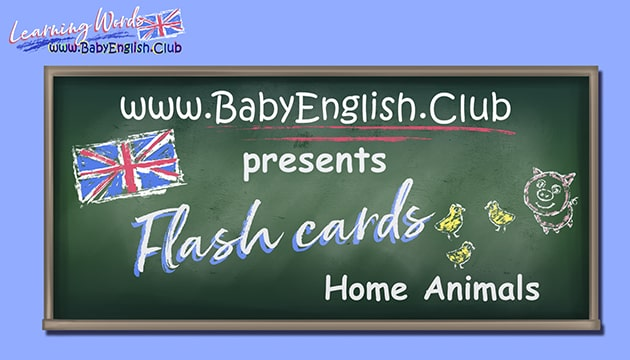 Flash Cards Home Animals